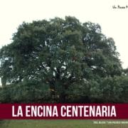 Encina Centenaria